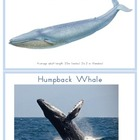 Whale Identification Cards