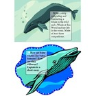 Whale Writing Prompts