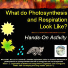 What do Photosynthesis and Respiration Look Like?