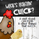 What&#039;s Hatchin&#039; Chick? A Lil Unit About Chickens