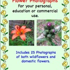 Wild Flowers and Domestic Flower Photographs for Commercial Use