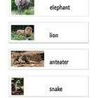 Zoo Word Wall