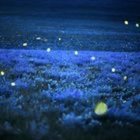 Fireflies and Dragonflies