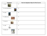 3rd Grade Science Plant Adaptation Graphic Organizer/Chart