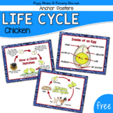Chicken Life Cycle Posters