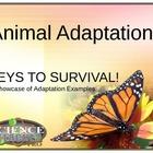 Animal Adaptation Showcase