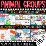Animal Groups -Insects, Reptiles, Amphibians, Fish, & Mammals