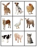 Animals Activity File