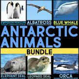 Antarctic Animals: Informational Article, QR Code Research