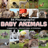Photograph / Photo Baby Animals 84 photos, Commercial OK!