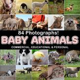 Photos Photographs BABY ANIMALS, clip art
