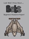 Bats Beginning Research Project