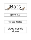 Bats and Birds Venn Diagram and more
