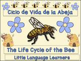 Bee Life Cycle Spanish Dual Language