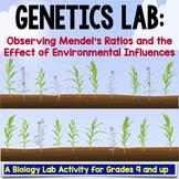Biology Lab: Effect Of Environment On Gene Expression (Genetics)