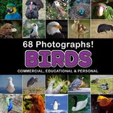 Photos Photographs BIRDS clip art