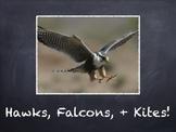 Birds Vol. 07: Hawks Falcons & Kites - PowerPoint Slidesho