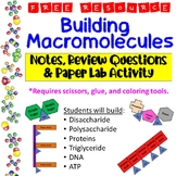 Building Macromolecules Lab Activity, Notes, and Review Questions