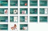 Cardiovascular Heart Disease Smartboard Notebook Lesson Plan