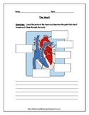 Cardiovascular System: Heart Diagram to Label