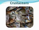 Crustaceans - Marine Life Vol. 2 - Slideshow Powerpoint Pr
