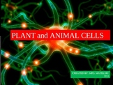 Differences between Plant and Animal Cells