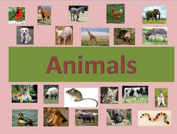 ESL/EFL Animal Vocabulary Powerpoint Activities and Games