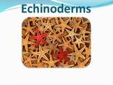 Echinoderms - Marine Life Vol. 4 - Slideshow Powerpoint Pr