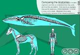 Evolution - Natural Selection Webquest