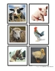 FARM THEMATIC UNIT printables, activities, games and lesson plans