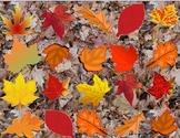 Fall Leaves Koosh Ball SMARTBoard Game