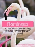 Flamingos:  A Non-Fiction Close Reading Resource