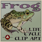 Frog Life Cycle Clip Art