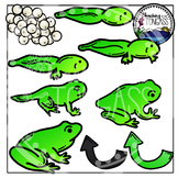 Frog Life Cycle Clipart Bundle