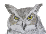 Great Horned Owl Head
