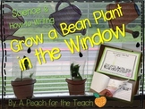 Grow a Bean in a Bag: Science & How-To Writing