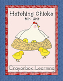 Hatching Chicks, Chicken Life Cycle,  Farm Unit, Science, Spring