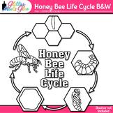 Honey Bee Life Cycle Clip Art [LINE ART]