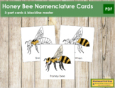 Honey Bee Nomenclature Cards