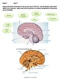 Human Brain - Bundled Unit PDF