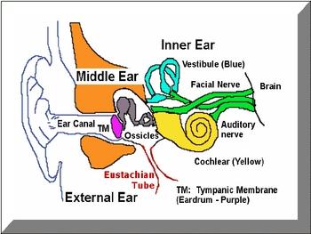 Human Senses Powerpoint (Vision, Hearing, Taste)