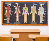 Interactive Human Body Wall Play Set