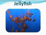 Jellyfish - Marine Life Vol. 1 - Slideshow Powerpoint Pres