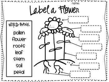 Label the Parts of a Flower