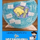 Labeling the Parts of a Fish FREEBIE