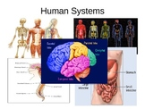 Levels of Organization and Skeletal System