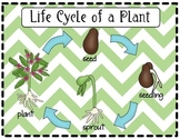 Life Cycle of a Plant Packet
