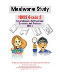 Mealworm Life Cycle Study