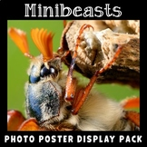 Bugs Insects Minibeasts Printable Photo Posters Display Pack