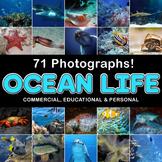 Photograph / Photo Ocean Sea Life 71 photos / Clip Art